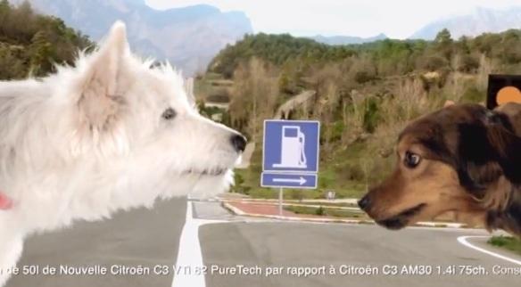 Citroen C3 dogs